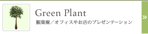 Green Plant 観葉樹