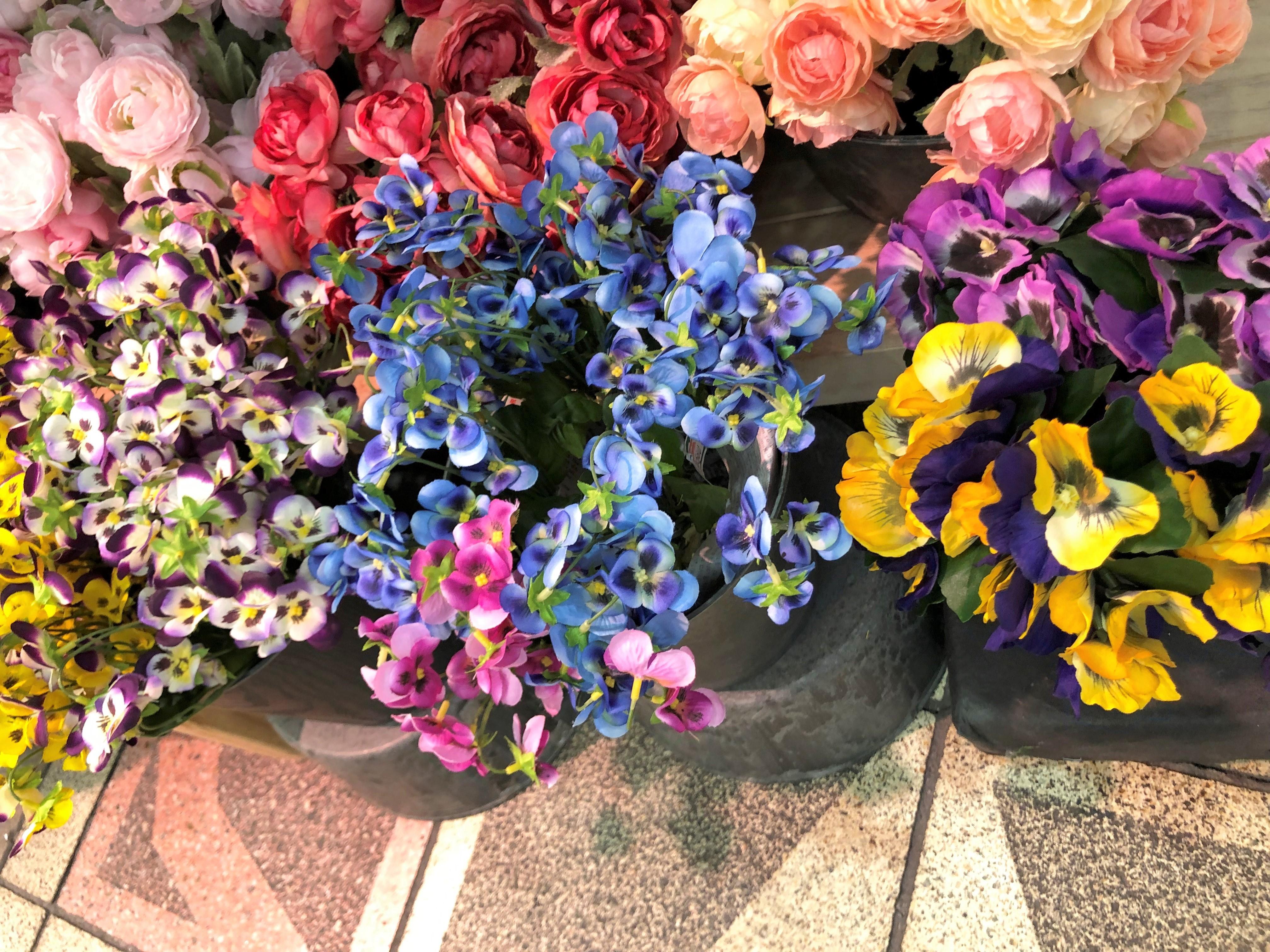 https://flower-saera.com/news/IMG_5179.JPG